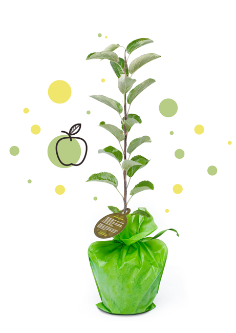 Boom In Pot Op Balkon.Boom Plant Instructies Hoe Plant Je Een Boompje Van Geefeenboompje Nl